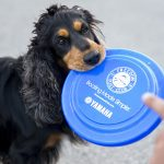 Dog with frisbee image